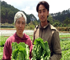 Người Nhật trồng rau tại Đà Lạt.