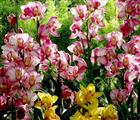 Hoa nhiều màu sắc