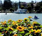 Hoa khoe sắc bên bờ hồ Xuân Hương