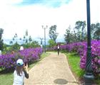 Lối vào đồi hoa mua thơ mộng và bình yên