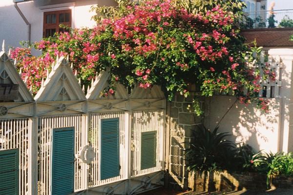 Đến Đà Lạt, bạn dễ bị mê đắm bởi một màu hoa nơi góc đường.