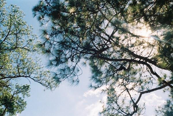 Những ánh mai chiếu rọi qua lùm cây tạo nên vẻ đẹp mộng mơ của mảnh đất ngàn hoa