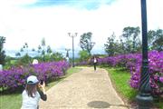 Đà Lạt: Đẹp mê hồn đồi hoa mua tím biếc